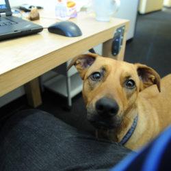 hond en een baan
